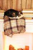 Cute cat lying with book on plaid  — 图库照片