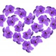 Beautiful flowers in shape of heart isolated on white — Stock Photo #63529829