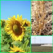 Agriculture collage — Stock Photo