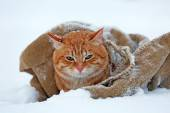 Cute red cat wrapped in blanket on snow background — Stock Photo