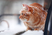 Red cat on bench — Stock Photo