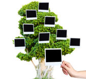 Big green tree with photo cards on it isolated on white — Fotografia Stock