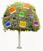 Green tree with color photo cards isolated on white — Fotografia Stock