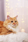 Lovable red cat — Stock Photo