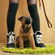 Cute puppy and owner in room — Stock Photo #63968209