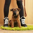 Cute puppy and owner in room — Stock Photo #63968217