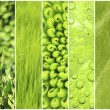Green color samples collage — Stock Photo #64266907