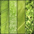 Green color samples collage — Stock Photo #64267563