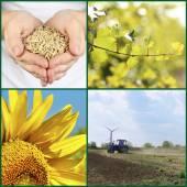 农业拼贴画 — 图库照片