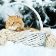 Red cat in wicker basket with scarf in winter time on fir tree background — Stock Photo #64270287