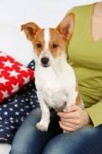 женщина, сидящая на диване с милой собакой, крупным планом — Стоковое фото