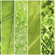 Green color samples collage — Stock Photo #64350455