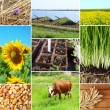 Agriculture collage — Stock Photo #64350473