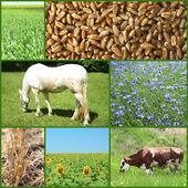 Agriculture collage — Foto de Stock
