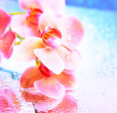 Beautiful blooming orchid close-up — Stock Photo