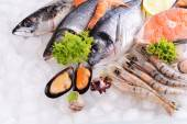 Fresh fish and seafood — Stock Photo