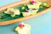 水のクローズ アップで美しい蘭の花 — ストック写真