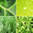 Green color samples collage — Stock Photo #64813085