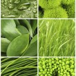 Green color samples collage — Stock Photo #64814393