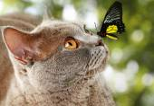 Colorful butterfly sitting on cat's nose on green natural background — ストック写真