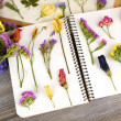 Composition with flowers and dry up plants on notebooks on table close up — Stock Photo #64874779