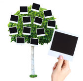 Big green tree with photo cards on it isolated on white — Foto Stock