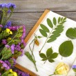 Composition with flowers and dry up plants on notebooks on table close up — Stock Photo #65011445