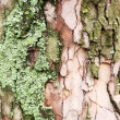 Old wood tree bard texture with moss, macro view — Stock Photo #65124213