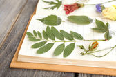 Dry up plants on notebook on wooden background — Stock Photo