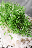Fresh cress salad on napkin and blurred wooden planks background — Stock Photo