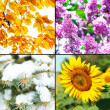 Four seasons collage: winter, spring, summer, autumn — Stock Photo #65373077