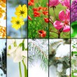 Four seasons collage: winter, spring, summer, autumn — Stock Photo #65373131