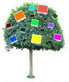 Big green tree with color photo cards on it isolated on white — Fotografia Stock