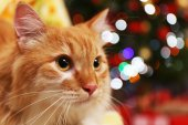 Lovable red cat on Christmas tree background — Stock Photo