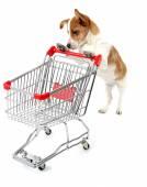 Alışveriş sepeti beyaz izole ile köpek — Stok fotoğraf