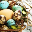 Bird eggs in nest on color wooden background — Stock Photo #65653453
