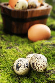 Bird eggs in wooden bucket on green grass background — Stock Photo