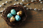 Bird eggs in nest and pussy willow flowers branches on wooden background — Stockfoto