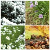 Four seasons collage: winter, spring, summer, autumn — Stock Photo