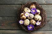 Bird eggs with decorative flowers — Stock Photo