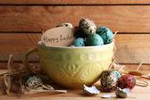 Bird colorful eggs — Stock Photo