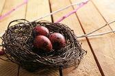 Bird colorful eggs — Zdjęcie stockowe