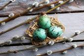 Bird colorful eggs — Stock fotografie