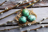 Bird colorful eggs — Stock Photo