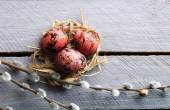 Bird colorful egg in nest wooden background — Stock Photo