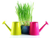 Fresh green grass in small metal bucket and decorative watering cans, isolated on white — Stockfoto