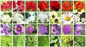 Beautiful nature collage — Stock Photo