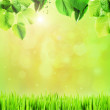 Beautiful spring background with leaves and green grass — Stock Photo #67444195