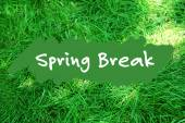 Spring break concept. Green grass background — Stock Photo