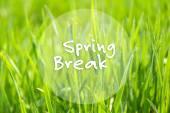 Spring break concept. Green grass outdoors — Stock Photo